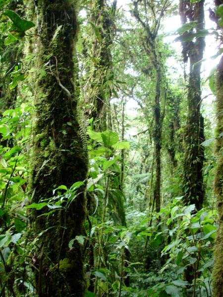 Exploring Trophic Cascades